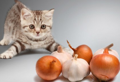 Is Garlic Powder In Cat Food Toxic To Cats