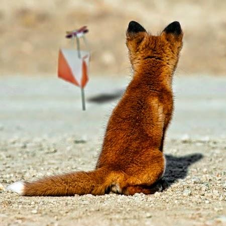 Радиопеленгация (охота на лис, ARDF) и спортивное ориентирование в Виннице