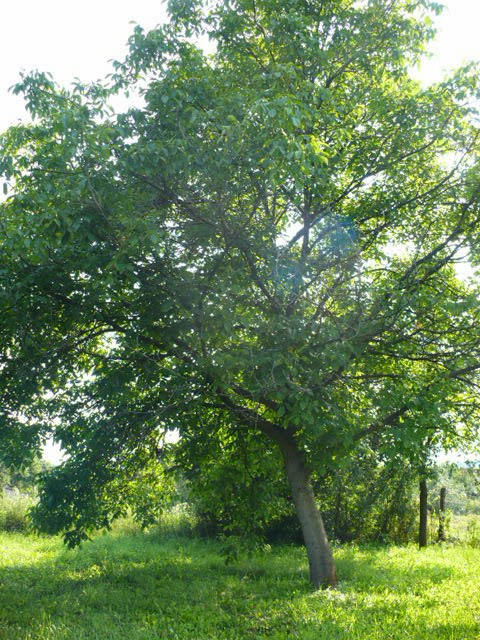 Pihenj és meditálj kedvedre itt a kert végében álló diófa alatt!