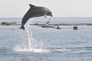 Hamas acusa golfinho de espionar para Israel