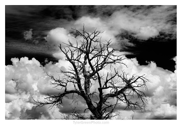 Ghost Ranch tree and clouds
