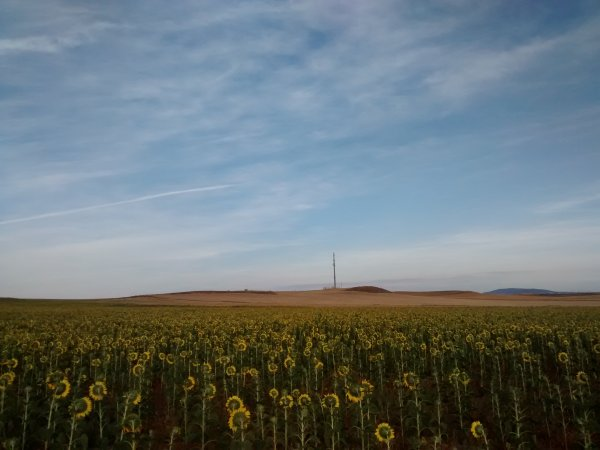 campo girasoles zaragoza