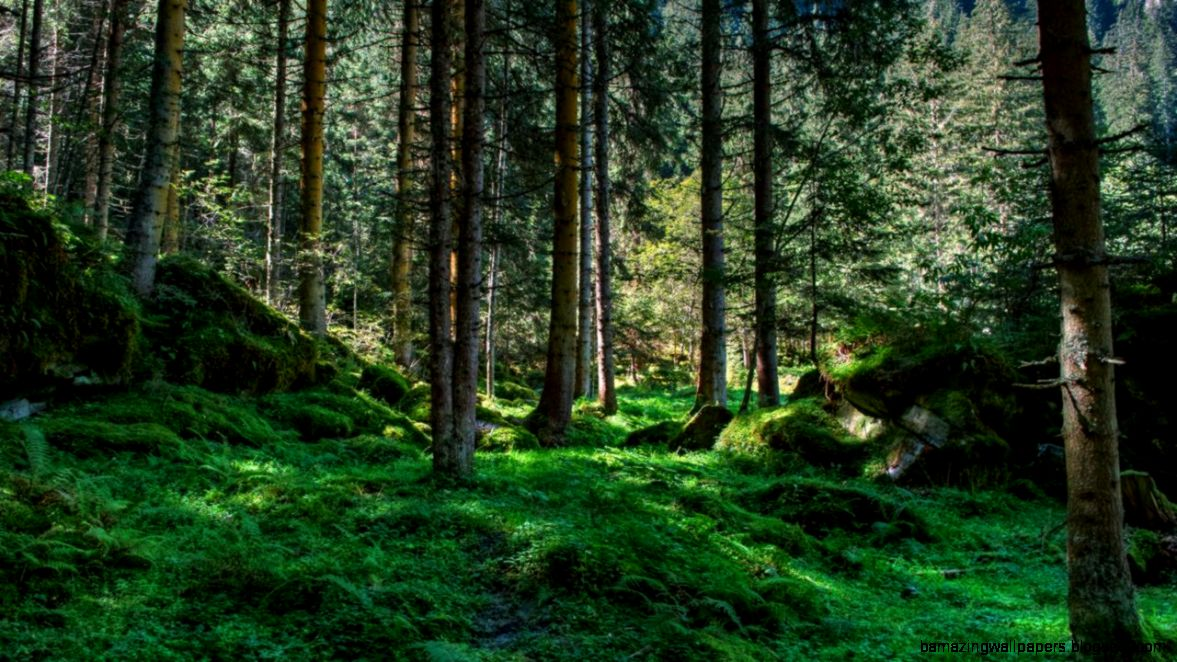 Forest High Resolution id 165781 – BUZZERG