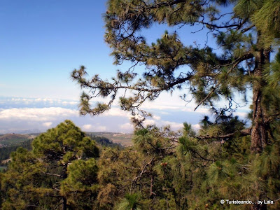 Parque Natural Corona Forestal, Tenerife, Canarias