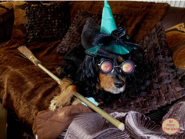 Molly The Wally & Her Broomstick!