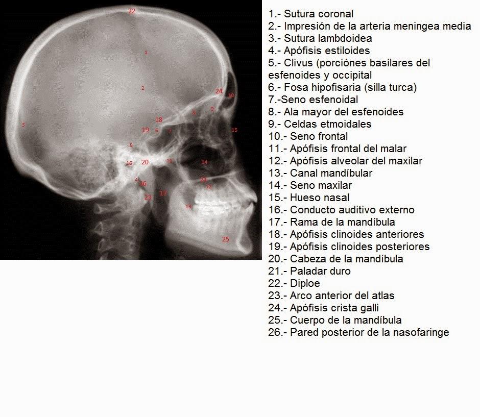 E-Anatomía Odontológica: noviembre 2014