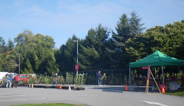 UBC Apple Festival 2011 - Apple trees for sale area (more than 200 varieties)