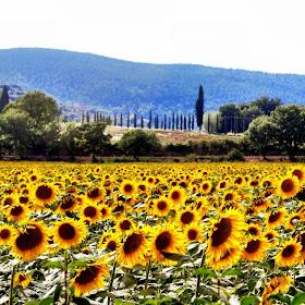 Tuscany inspiration!