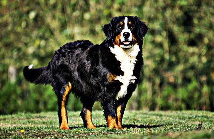 chien de garde et compagnie