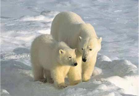 imagenes de osos