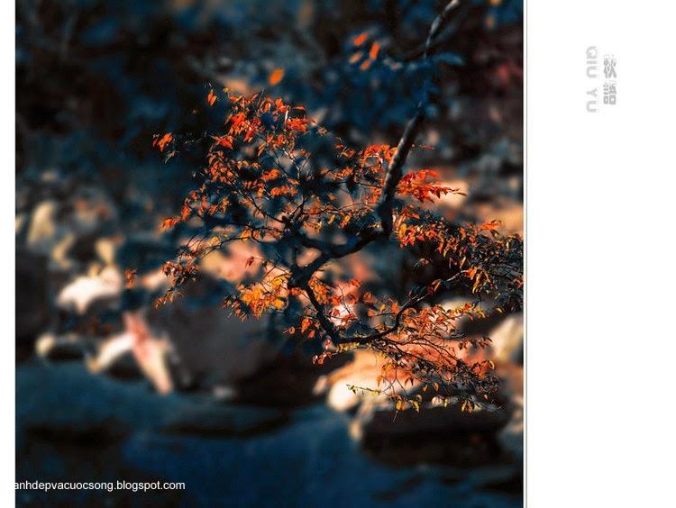 Chiếc lá mùa thu 10