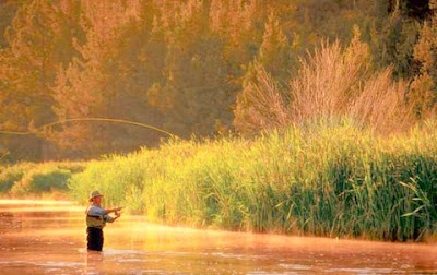 man casting fly-fishing in a peaceful stream, golden light