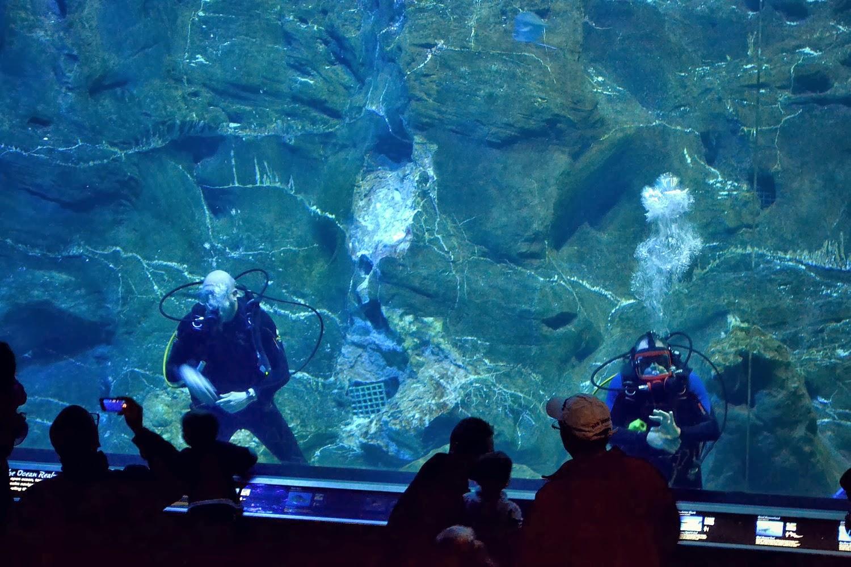 Adventure Aquarium - Frogs:Nature's Messenger {Exhibit Review + Giveaway} - Opera Singer in the