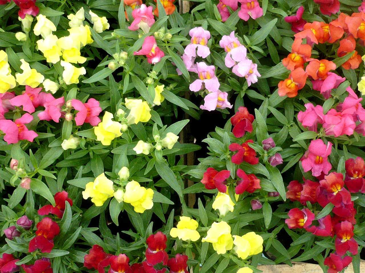 ano todoJardim da Terra DICA DO DIA Como ter um Jardim Florido o