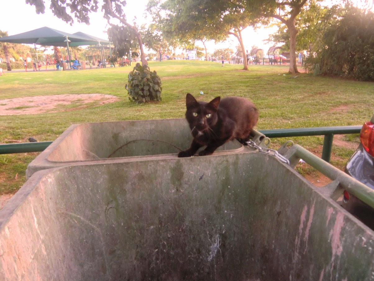 Кот Охраняет Мусорку