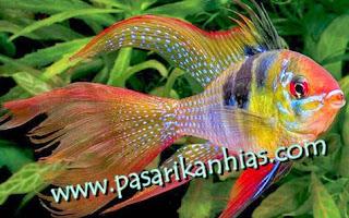 Tempat Jual Ikan Hias Di Jakarta