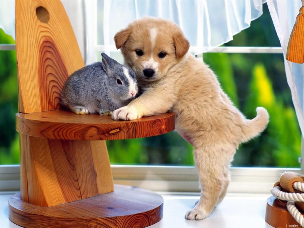 animales lindos: animales tiernos