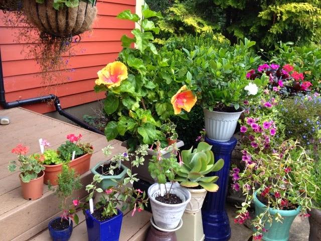 Julie Zickefoose en Blogspot: Plantas, plantas resistentes