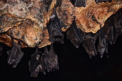 Goa Lawah tempio pipistrelli 2013 rebeccatrex