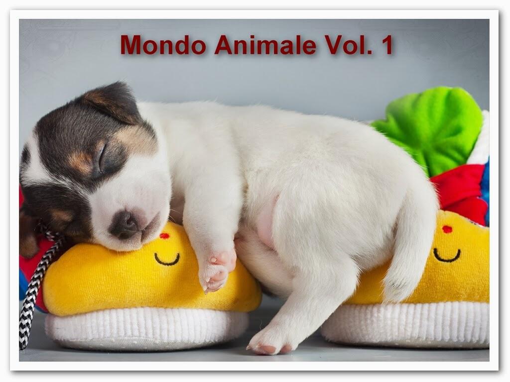 http://www.salvatorebaglieri.com/blog/swf/mondoanimale1/index.html