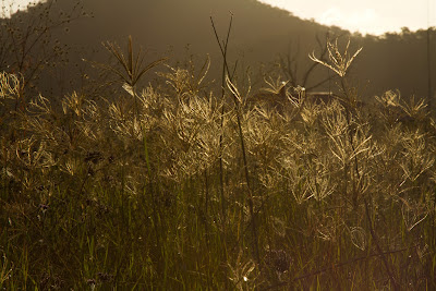 A photograph of back lit wild flowers taken in Sandy Hollow, Australia