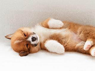 Drugs To Treat Autoimmune Disease In Dogs