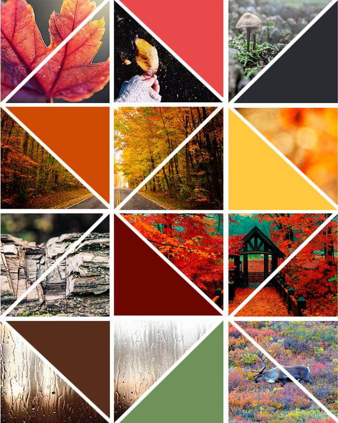 moodboard inspiracion fotografia otoño