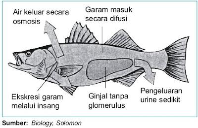 Mekanisme ekskresi ikan air tawar