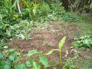 Prepared soil