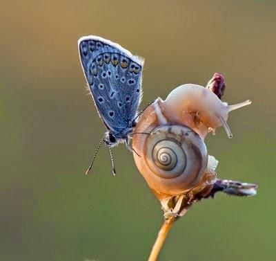 Foto-Foto siput yang lucu
