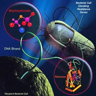 Hình ảnh mô tả sự kháng thuốc của vi khuẩn