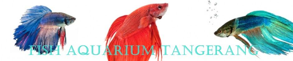 FISH AQUARIUM TANGERANG