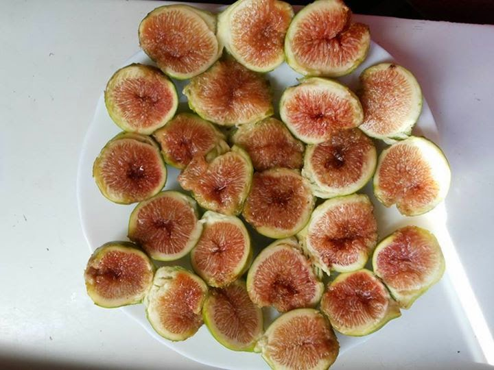 Figs : Kadota