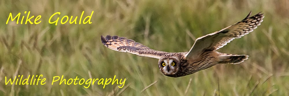 Mike Gould Wildlife Photography