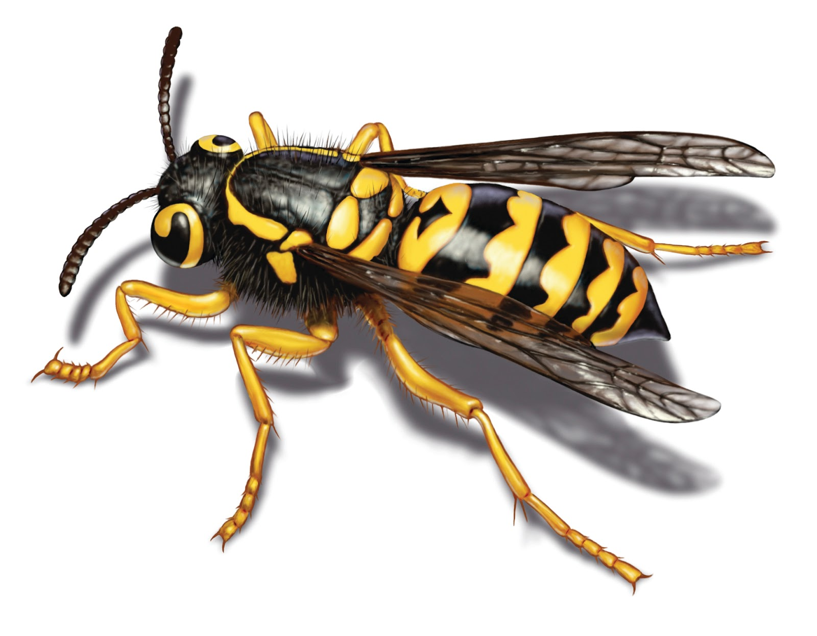 Matt's Blog: How to Get Rid of Yellow Jackets in Siding or ...