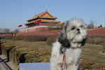 My Blog Dog- In Beijing