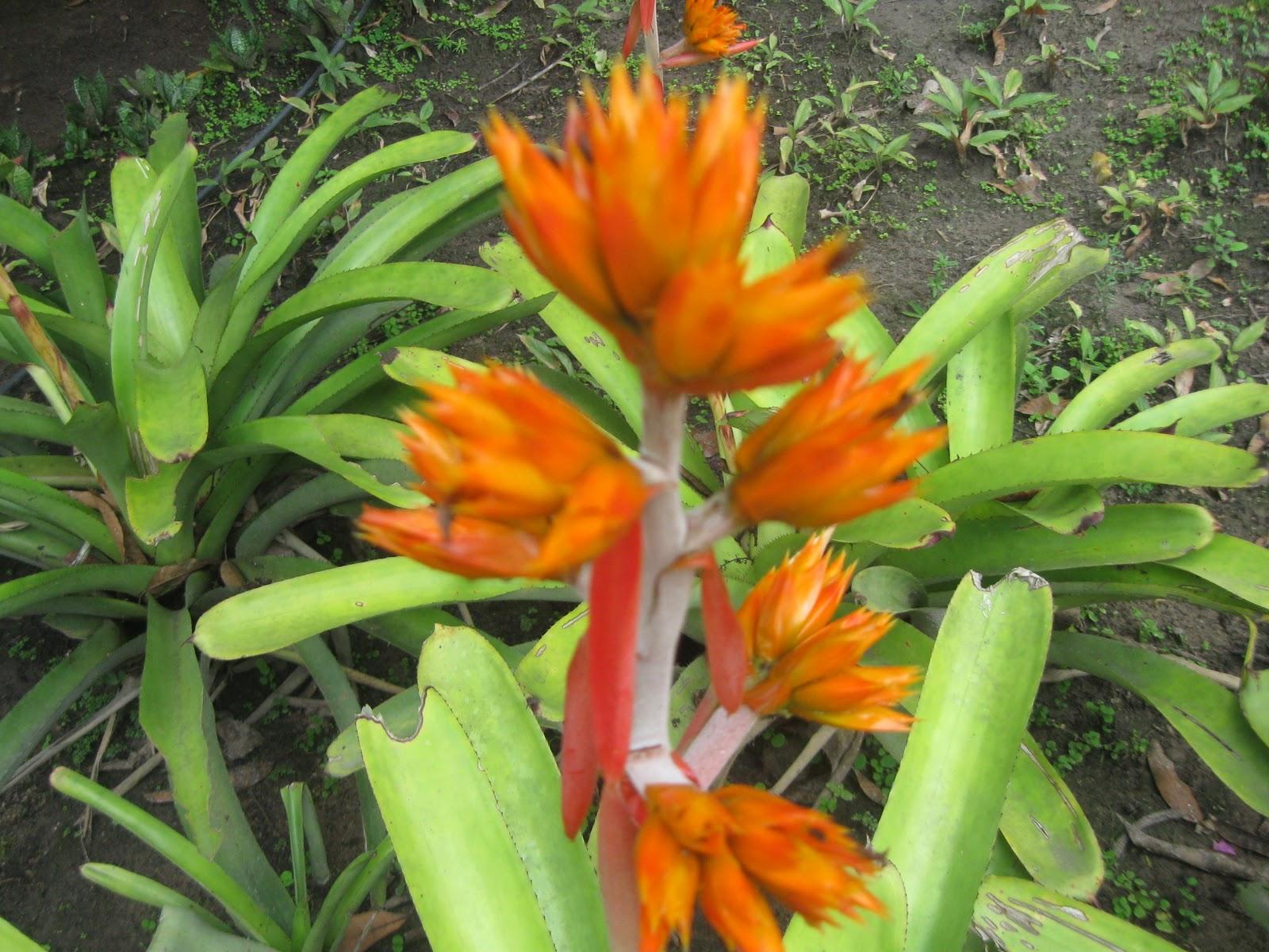 flores tropicais jardim : flores tropicais jardim:Flores tropicais, jardim natural