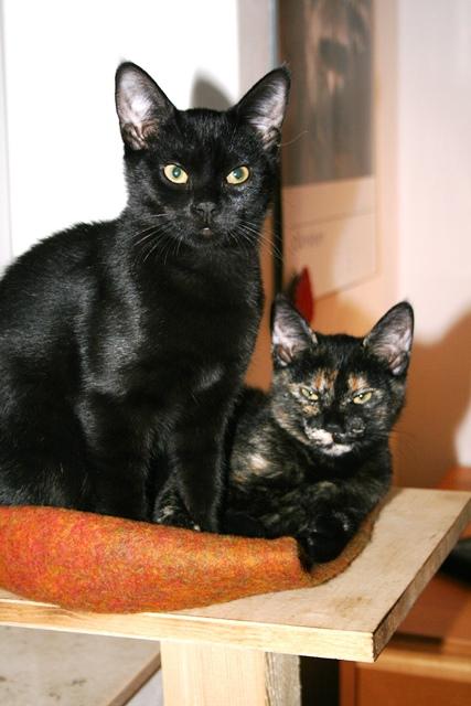 Tommi und Minusch