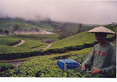 Munnar, olden days, tea plantations, Kerala, India travel blog