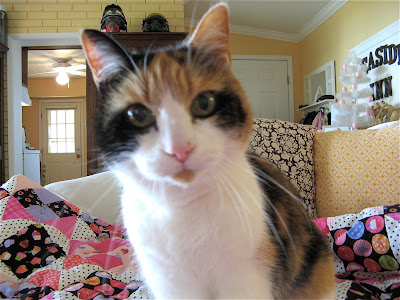 Daisy my calico cat