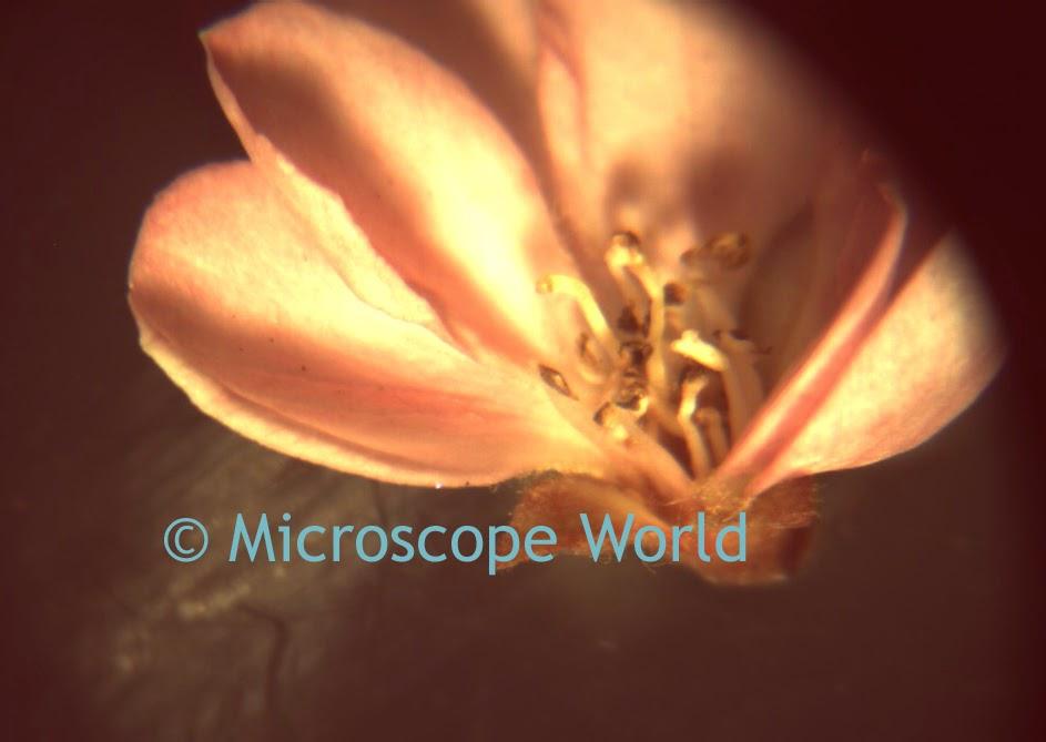 flowers under microscope
