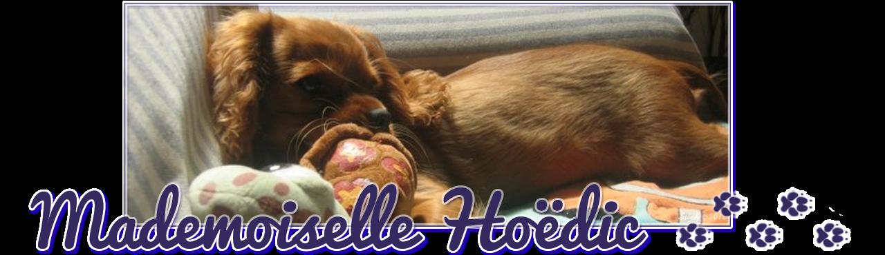 Mademoiselle Hoëdic