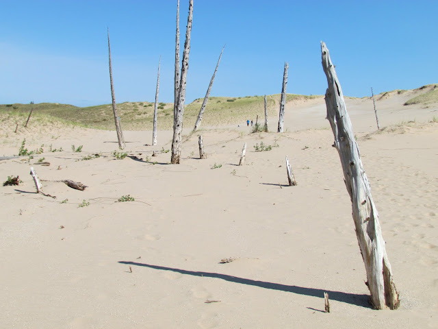 Ghost Forest, Sleeping Bear Dunes (photo by J. Schechter)