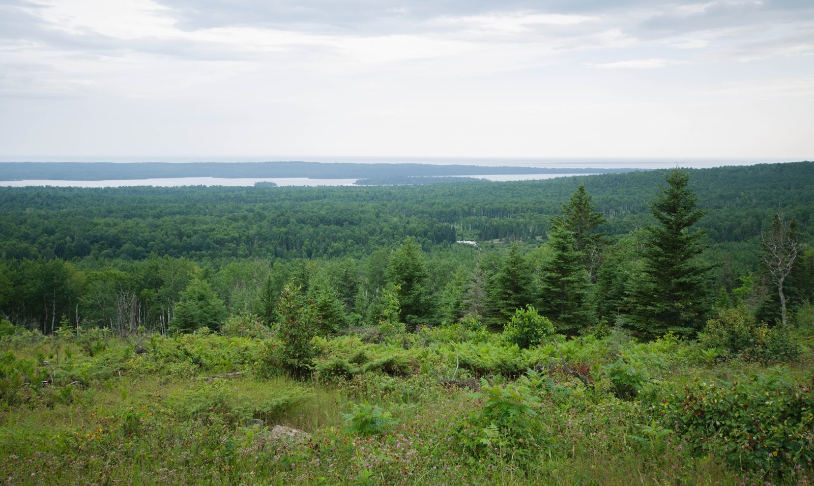 isle royale national park Isle royale national park is located in the northwest corner of lake superior the  island contains a roadless backcountry which prohibits the.
