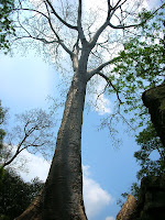 tree reach to blue sky - Happy Arbor Day from Soul Flower