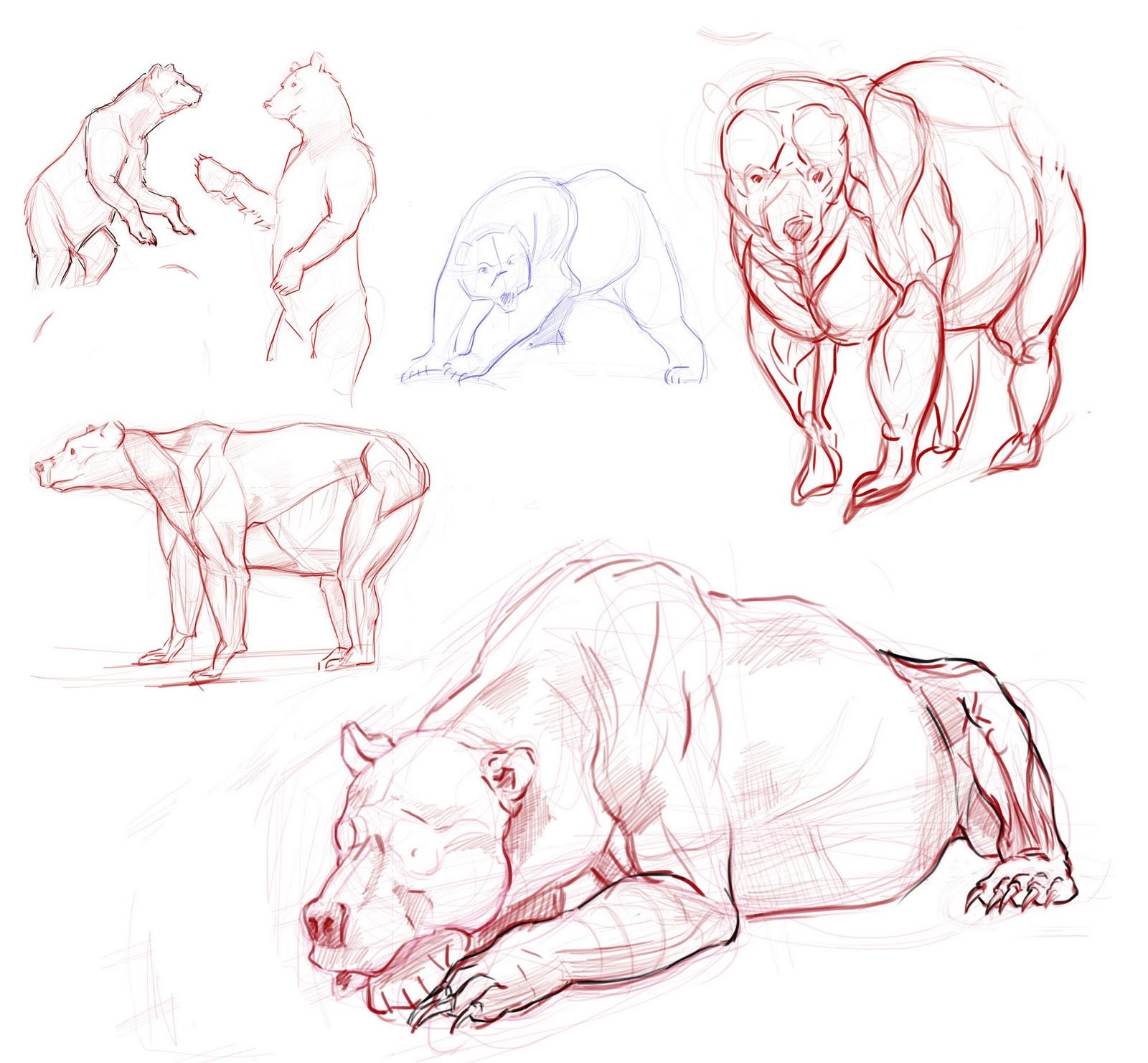 LapensaderadelDave: Estudios oso