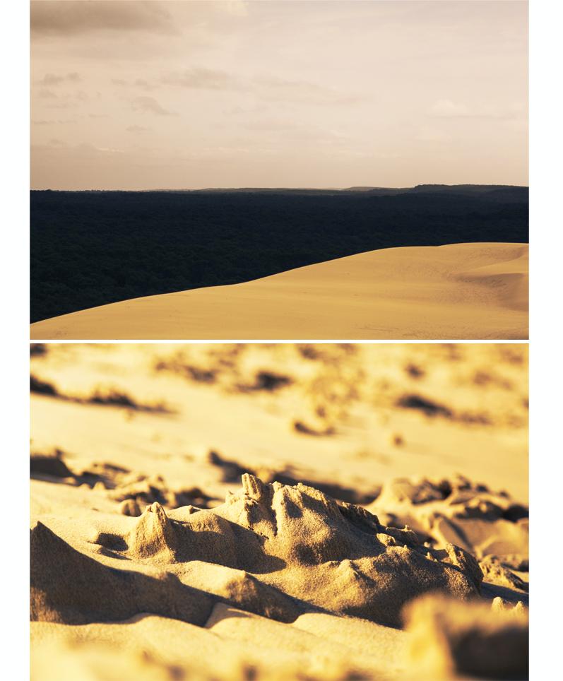 forêt des landes dune du pilat ou pyla