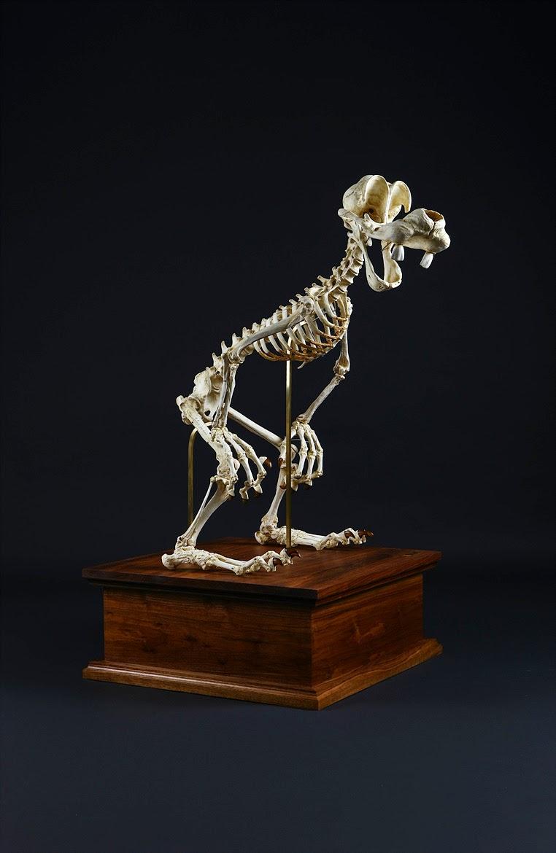 Esqueleto Dibujo Animado Esqueleto de en un Dibujo