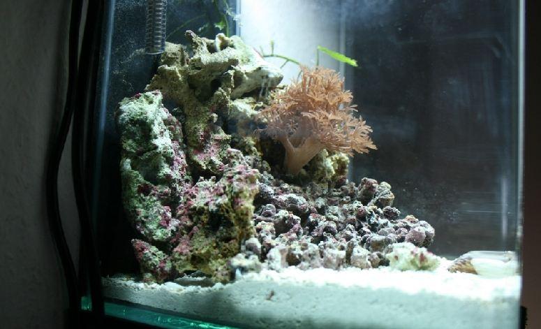 nano meerwasser aquaristik nano aquarium beispiel 2 10 liter. Black Bedroom Furniture Sets. Home Design Ideas