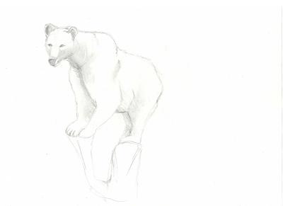dessin-ours-blanc-la-damenoire